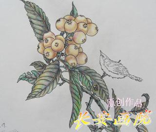 线描装饰画植物,花卉,动物 高清图片